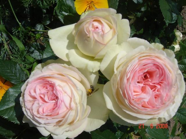 Цветы и стихи к ним